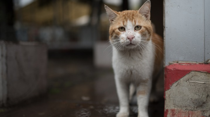 curious-stray-cat-picture-id1019048946-2