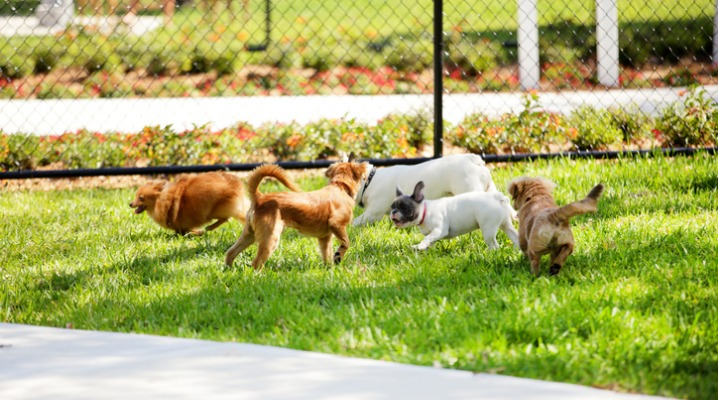 stock-image-of-dogs-in-the-park-picture-id486644823-2