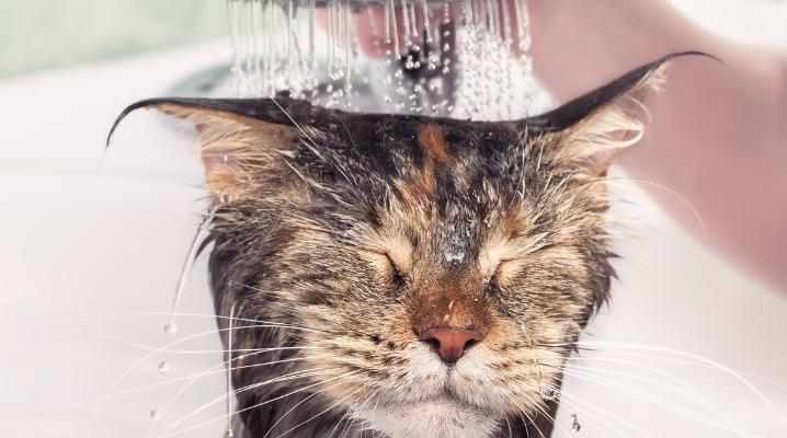 wet-cat-in-bath-picture-id916111836-2